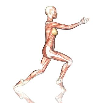 3d-darstellung einer weiblichen figur mit muskelkarte in yoga-pose