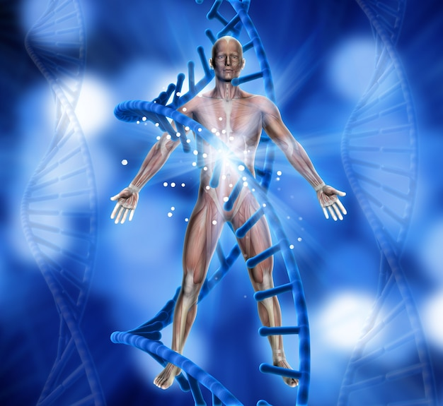 3d-darstellung von einem medizinischen hintergrund mit männlichen figur und dna-stränge