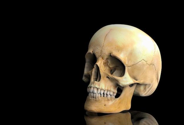 3d-rendering. ein menschlicher kopfschädelknochen mit reflexion auf schwarzem.