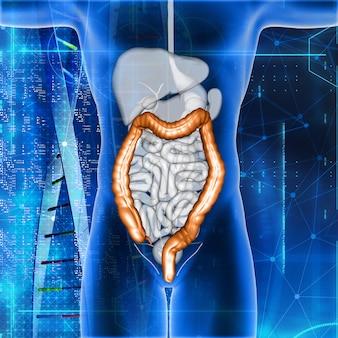 3d-rendering einer männlichen medizinischen figur mit hervorgehobenem doppelpunkt