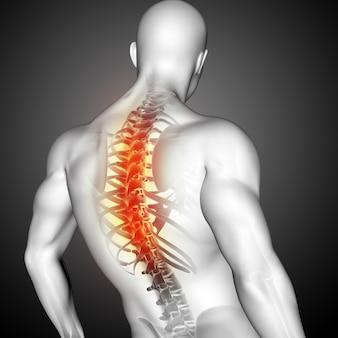 3d-rendering einer männlichen medizinischen figur mit hervorgehobener wirbelsäule