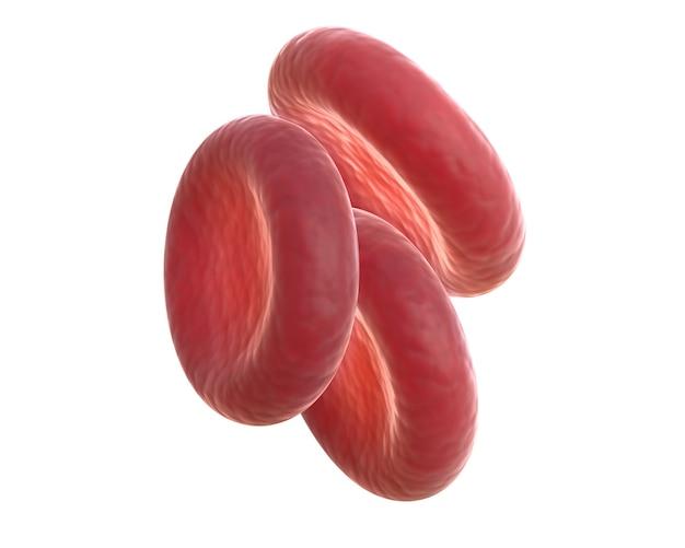 3d-rendering von drei roten blutkörperchen, auch erythrozyten genannt, sind zellen, die im blut zirkulieren und sauerstoff durch den körper transportieren
