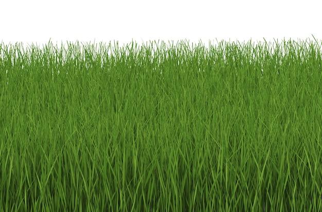 3d-rendering von grünem gras seitenansicht isoliert auf weiß