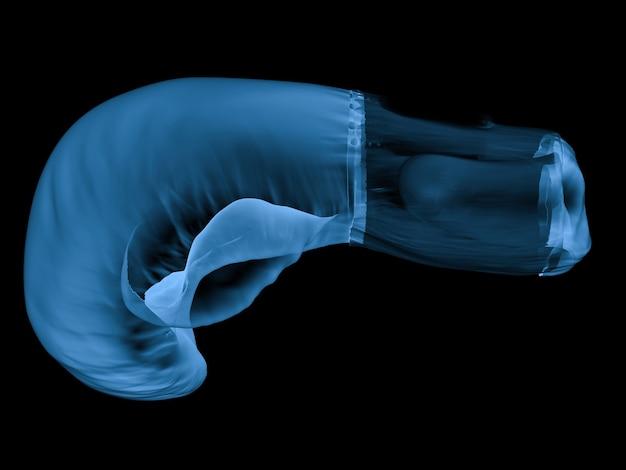3d-rendering x-ray-boxhandschuh isoliert auf schwarz