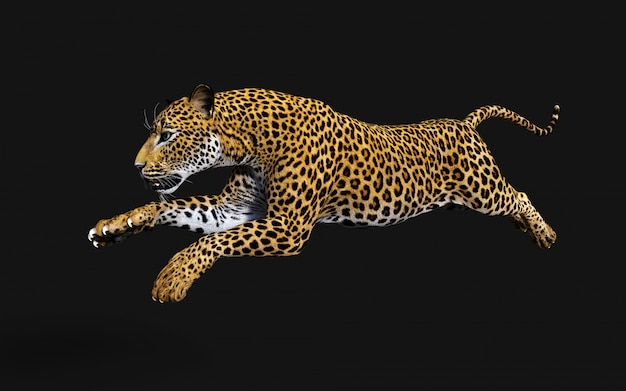 Abbildung 3d des getrennten leoparden auf schwarzem hintergrund