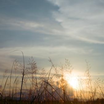 Abend herbst natur hintergrund, schöne wiese blumen im feld auf orange sonnenuntergang.