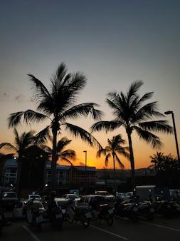 Abendhimmel in den tropen mit silhouetten von palmen und sonnenstrahlen.