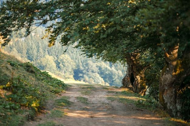 Abends kleiner fußweg im bergwald