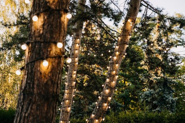 Abends mit glühbirnen geschmückte bäume in einem park