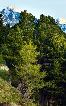 Abendsommer berglandschaft mit tannenwald vor. blick vom timmelsjoch - hochgebirgsstraße an der italienisch-österreichischen grenze.