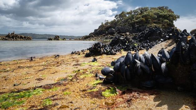 Abgelegener strand mit orangefarbenem sand und austern kauerte rocksulva island stewart island neuseeland
