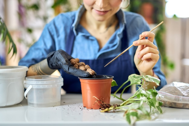 Abgeschnittene aufnahme einer frau, die drainage in den blumentopf gießt, während sie sich auf die pflanzentransplantation vorbereitet