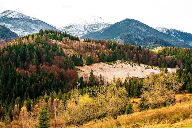 Abholzung in den bergen der karpaten, aussicht an einem schönen bewölkten warmen tag
