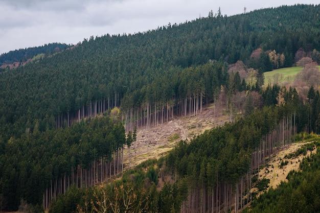 Abholzung in den bergen. umweltschäden verursachen.
