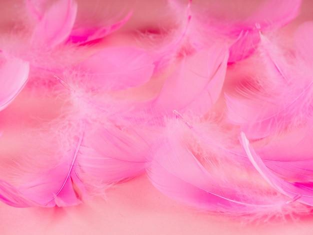 Abschluss der selektiven weichzeichnung herauf rosa federbeschaffenheitshintergrund in der pastellfarbe