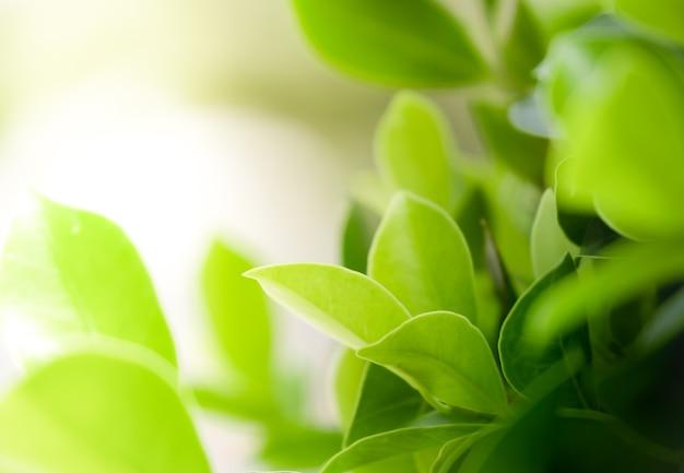 Abschluss herauf schöne ansicht von natürlichen grünblättern auf grün verwischte hintergrund