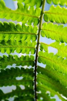 Abschluss oben der abstrakten grünen blatthintergrundbeschaffenheit