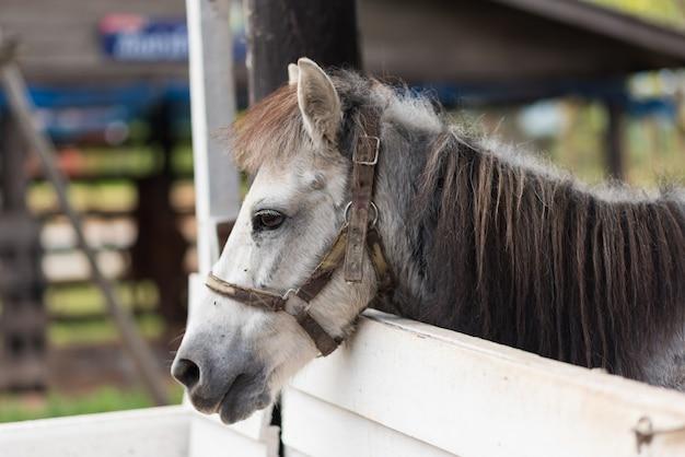 Abschluss oben des pferds im käfig am zoo
