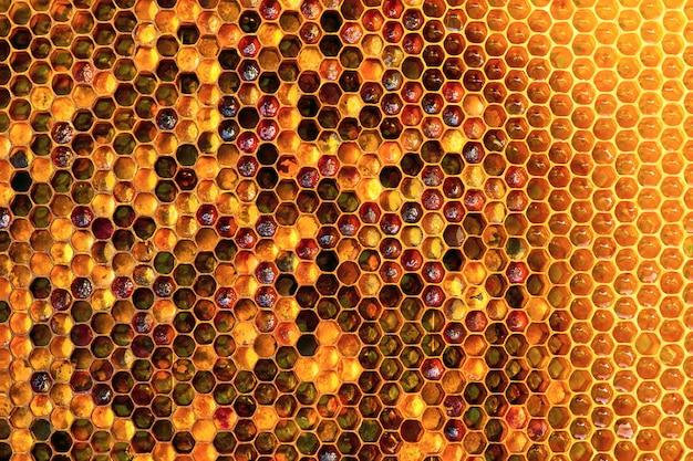 Abschnitt der wachswabe aus einem bienenstock, der mit goldenem honig gefüllt ist