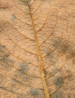 Abstrakte blattadern. brown-herbsturlaubabschluß oben. platz für beschriftungen