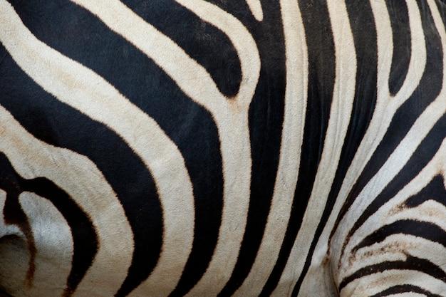 Abstrakte hintergrundhaut eines zebras