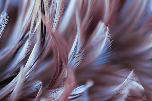 Abstrakte hühnerfederbeschaffenheit für hintergrund, weiche farbe und unschärfeart