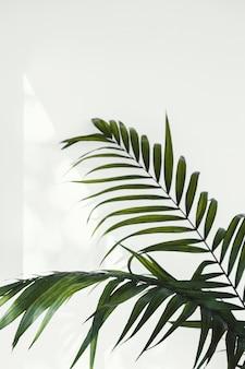 Abstrakte minimale konzeptpflanze und schatten