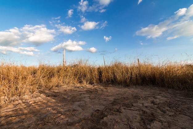 Abstrakte natur des frühlinges oder des sommers mit gras und blauem himmel in der rückseite