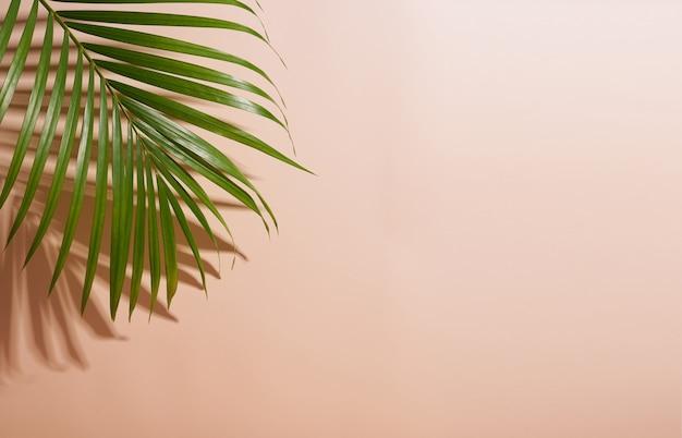 Abstrakte palmblatt- und schattenreflexion auf buntem hintergrund