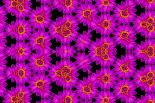 Abstrakte reflexion des purpurroten lotos der draufsicht und des gelben blütenstaubs, kaleidoskophintergrund