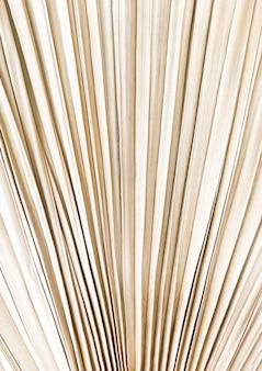 Abstrakte textur des trockenen pampaspalmenblattes.