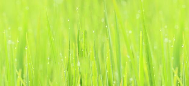 Abstrakte unschärfe natürliches grün für den hintergrund