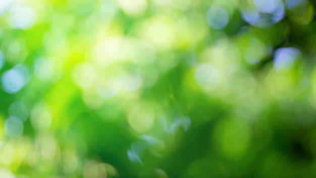 Abstrakte unscharfe grüne farbe für hintergrund, unscharfes und defokussiertes effektfederkonzept für design