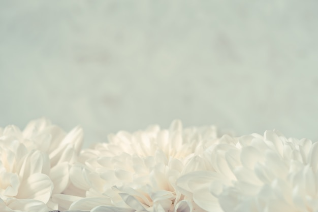 Abstrakte weiße unscharfe oberfläche mit chrysanthemenblüten