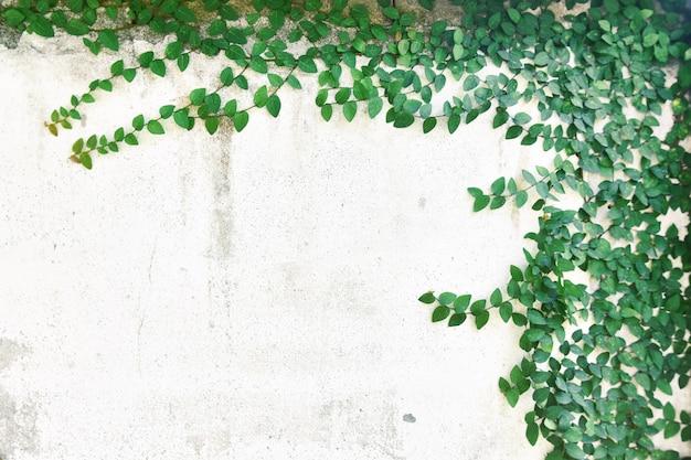 Abstrakter betriebswandhintergrund, die grüne kriechpflanzenanlage mit kleiner gelber blume auf alter hausmauer des schmutzes