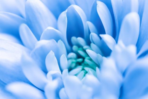 Abstrakter blumenhintergrund blaue chrysanthemeblumenmakroblumenhintergrund für feiertagsmarkendesign