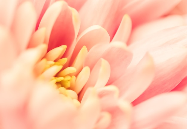 Abstrakter blumenhintergrund rosa chrysantheme blumenmakro blüht hintergrund für feiertagsmarkendesign