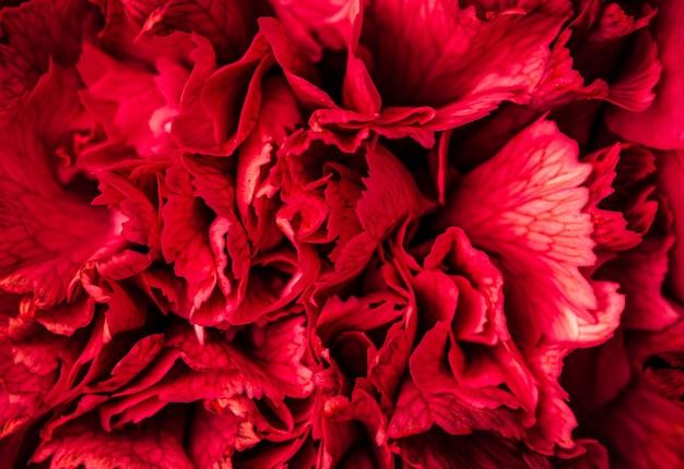 Abstrakter blumenhintergrund rote nelkenblütenblätter makroblumenhintergrund für feiertagsmarke