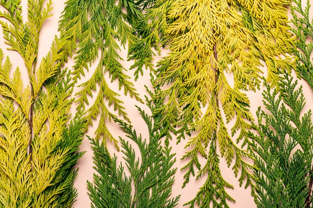 Abstrakter blumenhintergrund von gelbgrünen blättern.