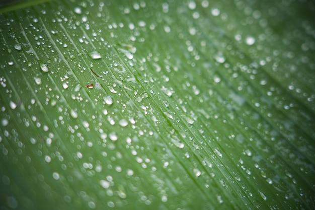 Abstrakter gestreifter natürlicher hintergrund, details des bananenblattes mit regentropfen und unscharfes bokeh für hintergrund
