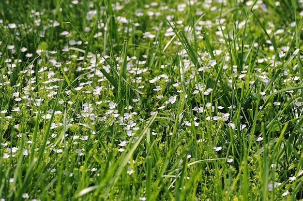 Abstrakter hintergrund - grünes gras und blaue blumen