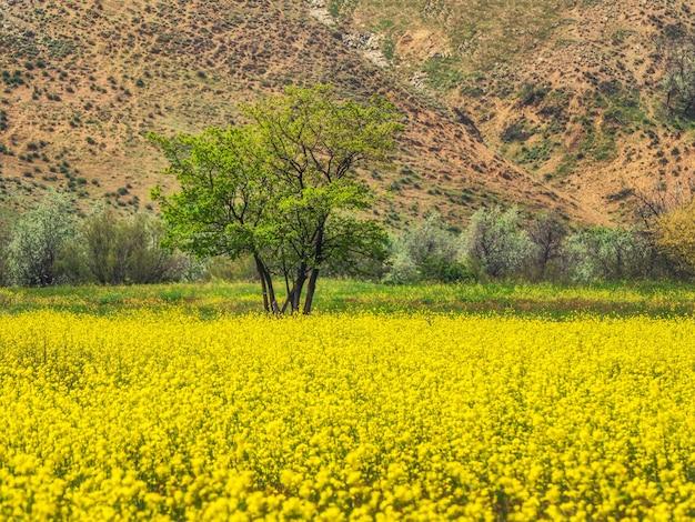 Abstrakter hintergrund mit einem gelben blühenden feld auf dem hintergrund der berge. blühender raps. erstaunliche helle bunte frühlingslandschaft für tapeten.