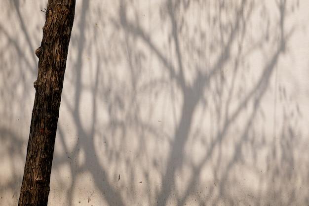 Abstrakter hintergrund textuer von schatten treiben auf einer betonmauer blätter