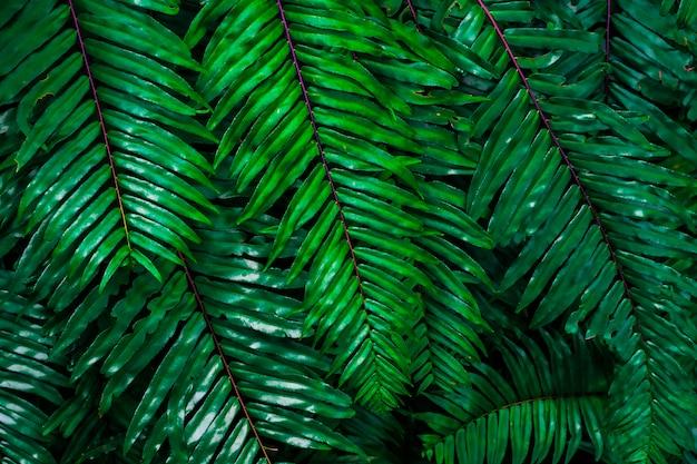 Abstrakter hintergrund vom grünen blattmuster in tropischem forrest mit sonnenlicht. naturkulisse.