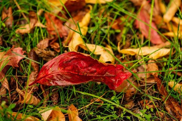 Abstrakter hintergrund vom herbstlaub auf einem gras. herbstblätter. wassertropfen auf herbstblättern. herbstlaub auf grüner wiese, ansicht von oben