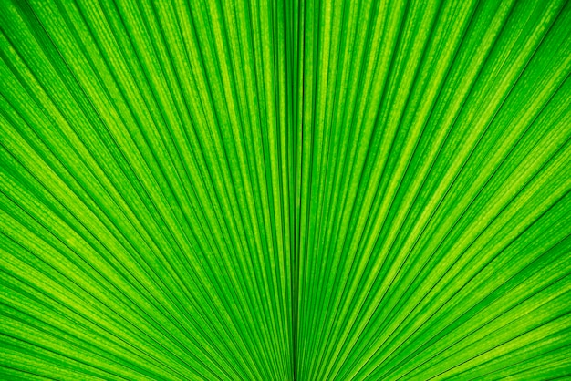 Abstrakter hintergrund von der grünen palmblattbeschaffenheit. naturtapete und -hintergrund.