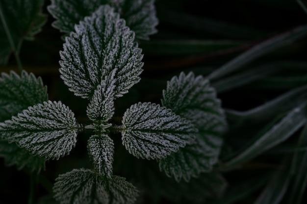 Abstrakter hintergrund von grünen brennnesselblättern mit frost