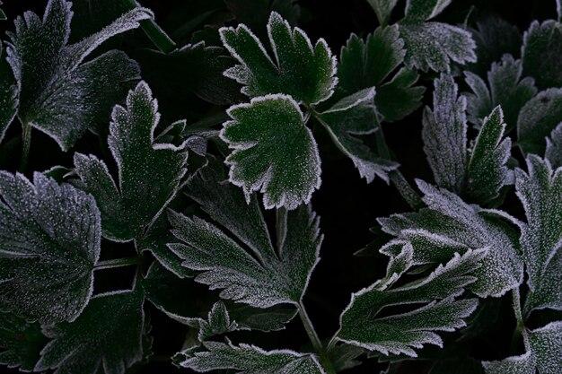 Abstrakter hintergrund von grünen strukturierten blättern von pflanzen mit weißem frost