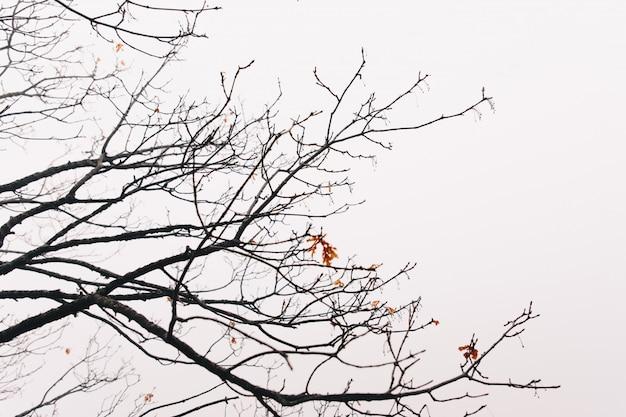 Abstrakter hintergrund von niederlassungen im winter und im bewölkten himmel
