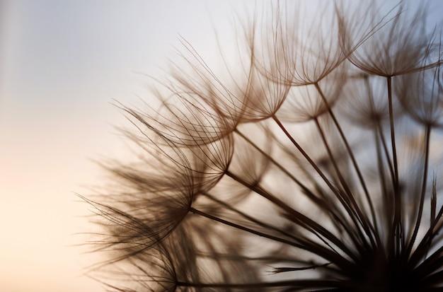 Abstrakter löwenzahnblumenhintergrund
